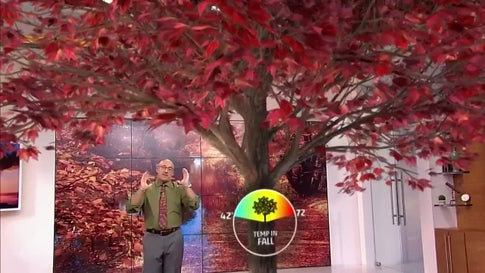 The Science Behind Why Leaves Change Color in the Fall
