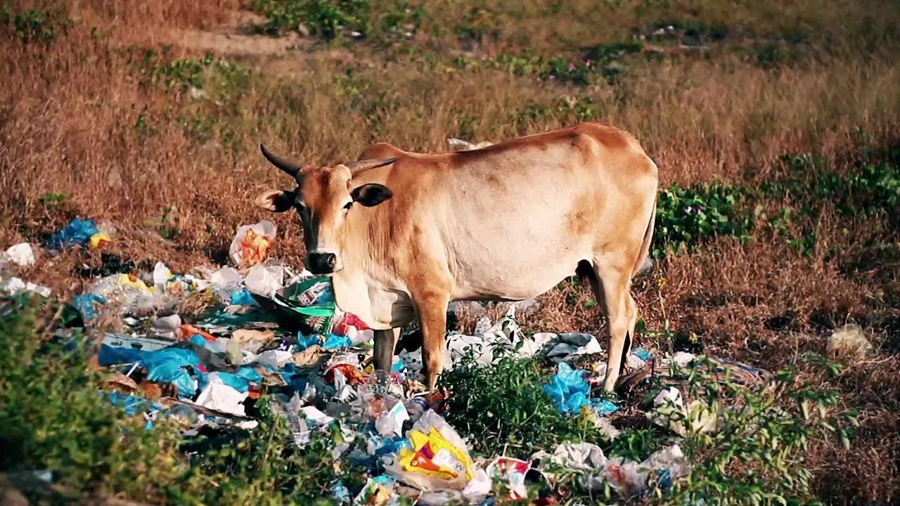 Indien will Einwegplastik komplett abschaffen