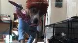 Video feroz: Mascotas se alistan para Halloween