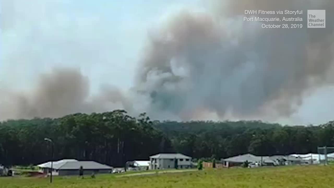 Hundreds of Koalas Feared Dead in Australia Wildfires