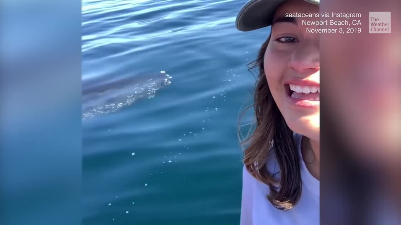 Woman Cries Happy Tears During Close Humpback Whale Encounter