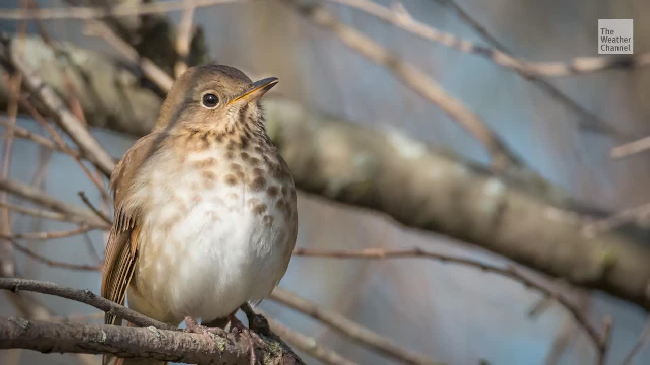 These Birds Are Surprisingly Good at Predicting Hurricane Seasons