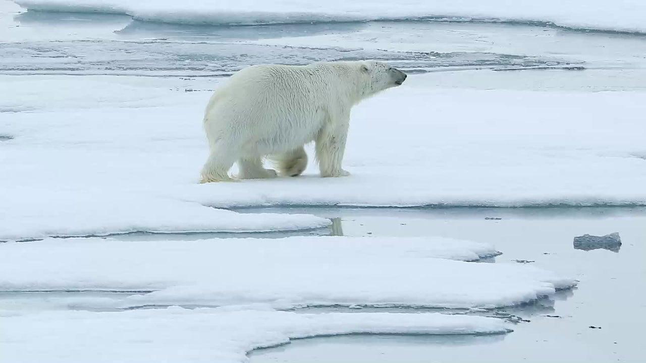 Am Donnerstagabend wurde in Berlin der sechste World Ocean Review (WOR) vorgestellt. Experten betonen vor allem, dass die Lebensfähigkeit unseres Planeten von den Polarregionen abhängig ist, die aufgrund des Klimawandels stark gefährdet sind.