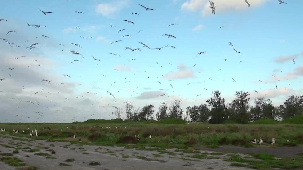 Tiefblaues Wasser, weiße Sandstrände - die von Menschen unbewohnten Midwayinseln gelten als Paradies für Seevögel. Doch der Zivilisationsmüll erreicht auch das abgelegene Atoll und richtet dort große Schäden an.