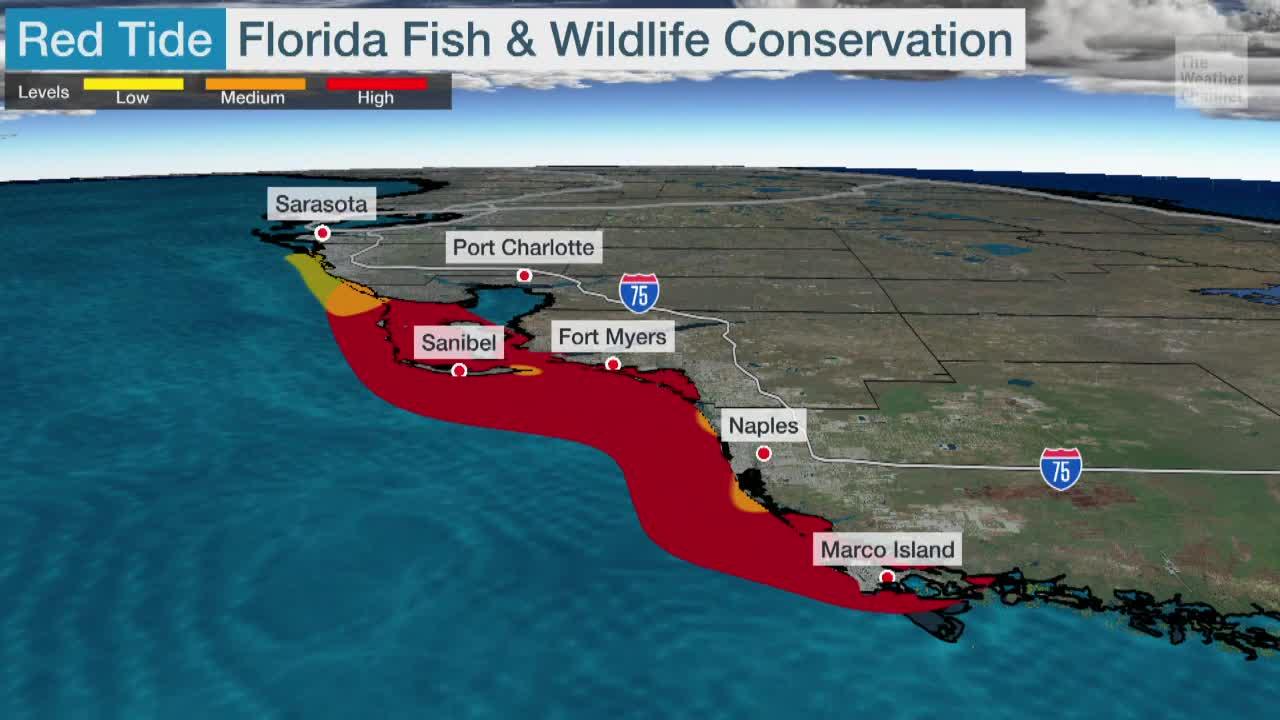 Red Tide Grows Drastically Off Florida's West Coast