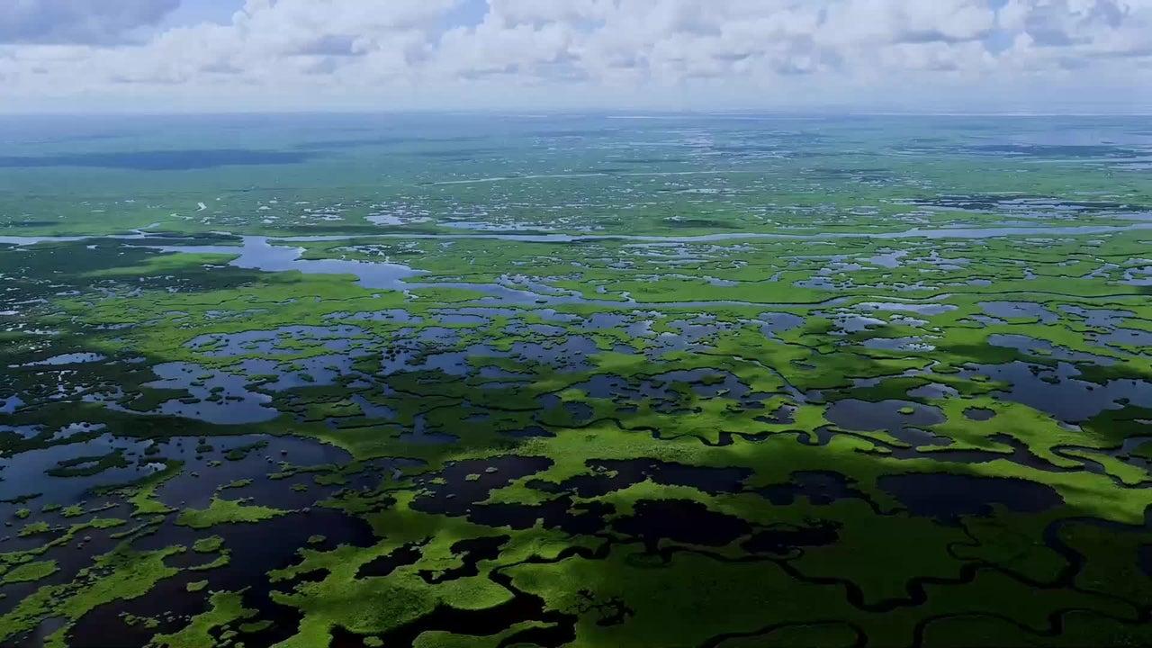 Über Jahrzehnte hinweg wurden die Everglades in Florida als unnützes Sumpfgebiet abgetan. Wie wichtig der Wasserkreislauf für die Natur ist, haben Politik und Wissenschaft zwar mittlerweile verstanden, doch die Renaturierung stößt auf Schwierigkeiten.