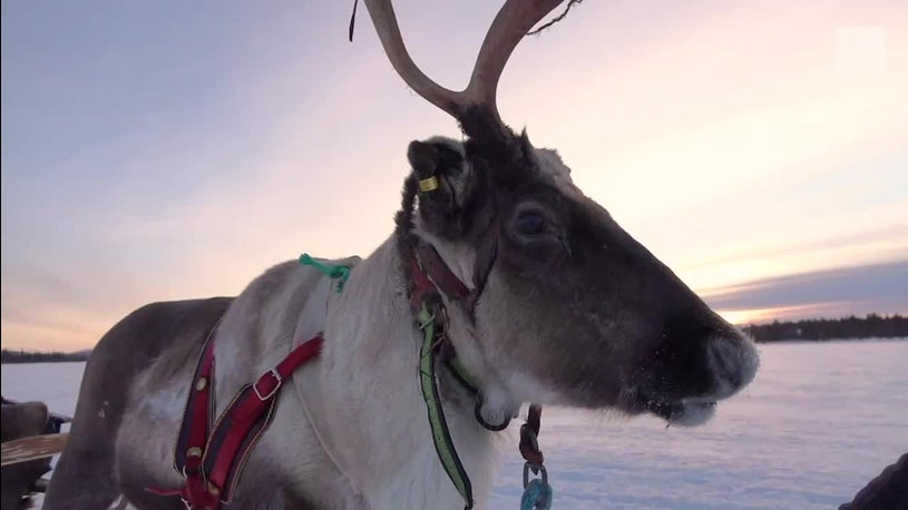 Santa's reindeer are in trouble due to climate change