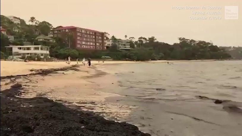 Wie im Katastrophenfilm: Strand in Sydney färbst sich plötzlich schwarz