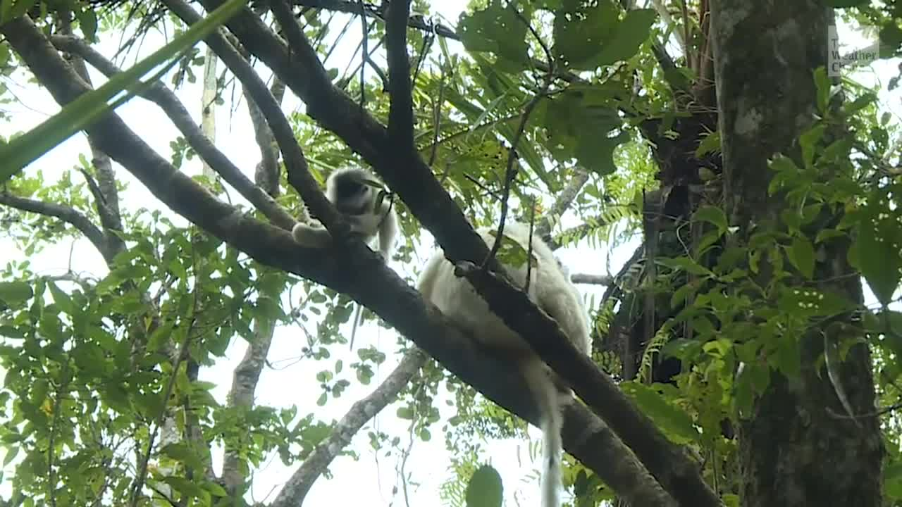 Madagascar Rainforest Could Disappear in 50 Years
