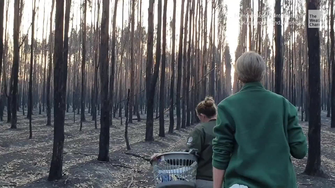 Humane Society International workers arrived at a devastated Kangaroo Island in southern Australia after the deadly bushfires. The flames burned almost half of the island, killing thousands of wild animals and destroying habitats.