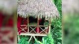 Seele baumeln lassen mal anders: Hier wohnen Touristen in Bäumen