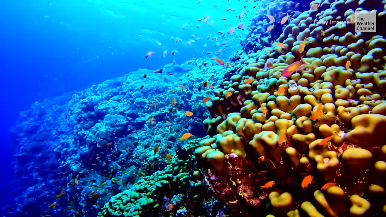 Coral Reefs May Disappear from Earth Entirely by 2100