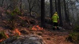 Forscher bestätigen: Klimawandel Schuld an verheerenden Waldbränden in Australien