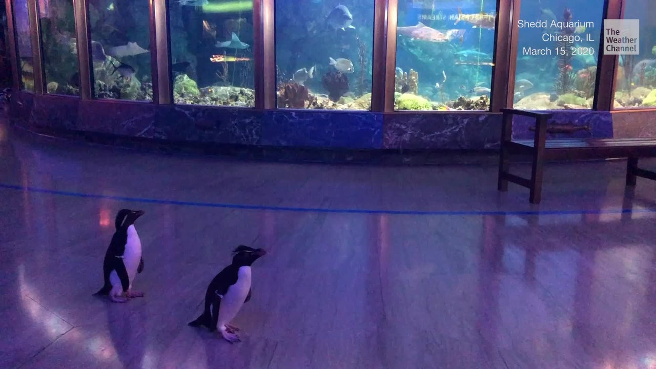 Penguins Go on Field Day as Aquarium Closes