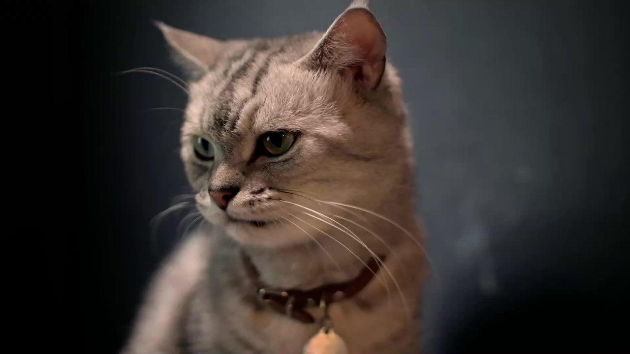 Eine Katze hat sich in Belgien bei einem Menschen mit dem Coronavirus angesteckt. Auch zwei Hunde litten an dem neuartigen Virus. Diese Ratschläge gibt die belgische Gesundheitsbehörde.
