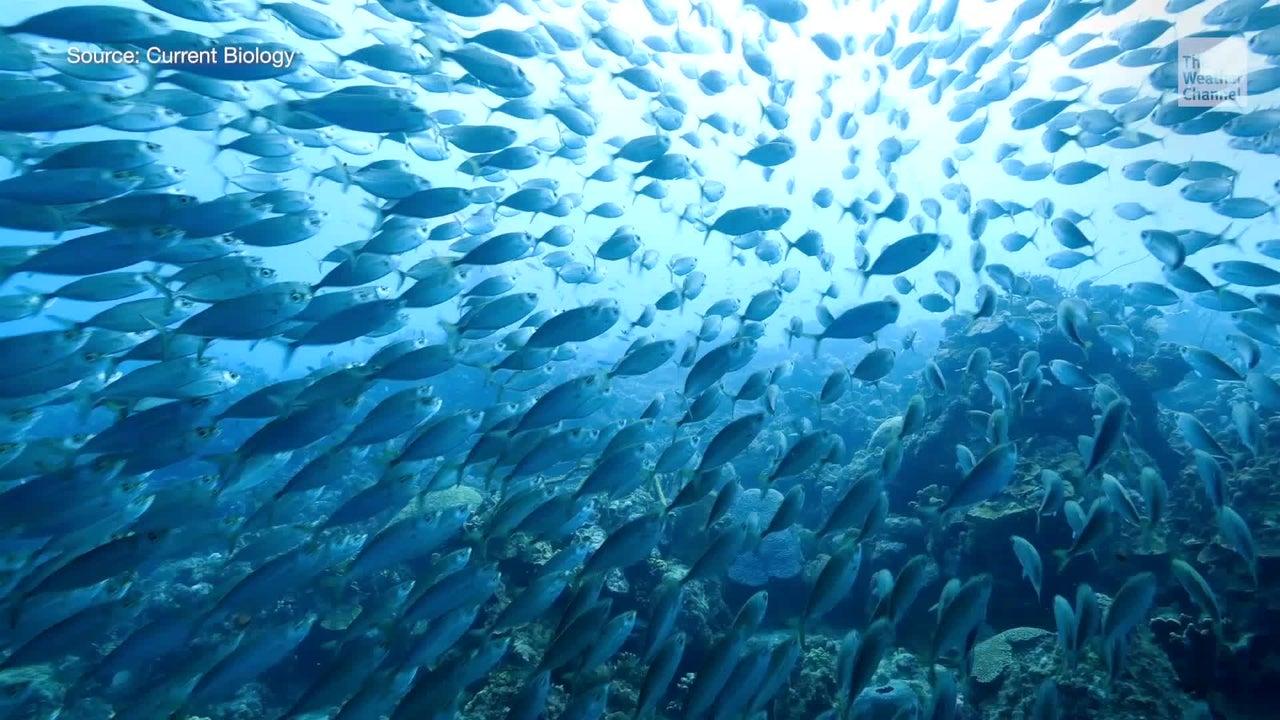Da die Ozeane immer wärmer werden, bewegen sich die Meerestiere in Richtung der Pole. Jedoch hat das schwerwiegende Folgen - sowohl für Mensch und Tier.
