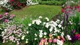 4 Tipps: So machen Sie Ihren Garten zum Singvögel-Paradies