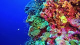 Mystery of Glowing Corals After Bleaching May Have Been Solved