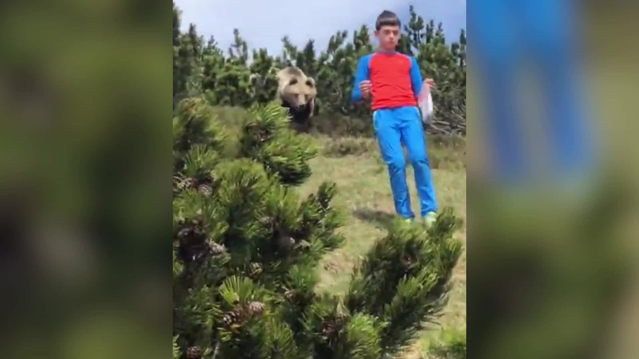A 12-year-old boy had a close encounter with a massive brown bear in the mountains of northern Italy. Watch as he keeps his cool and does exactly what he's supposed to in the nerve-racking video.