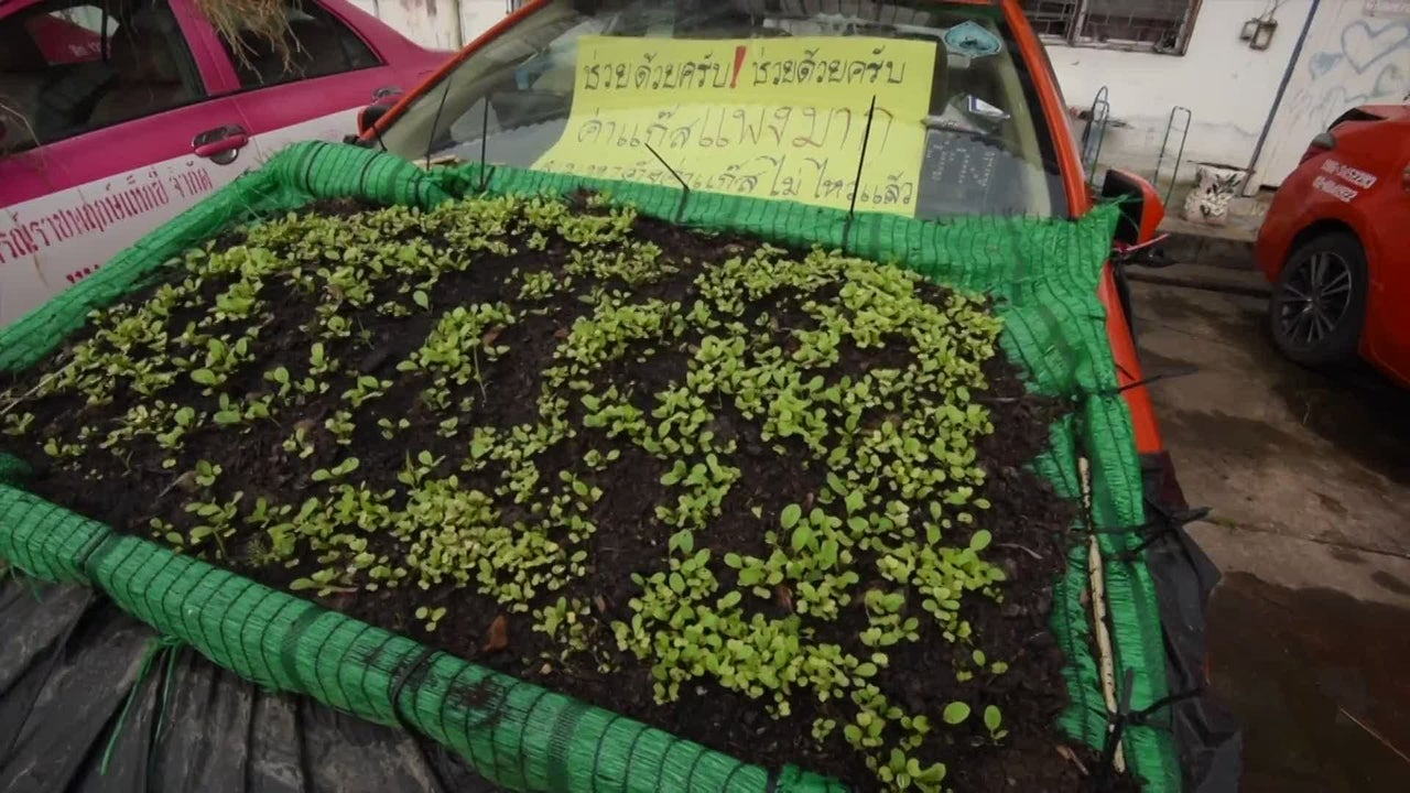 Why Drivers Are Growing Gardens on Their Car Roofs