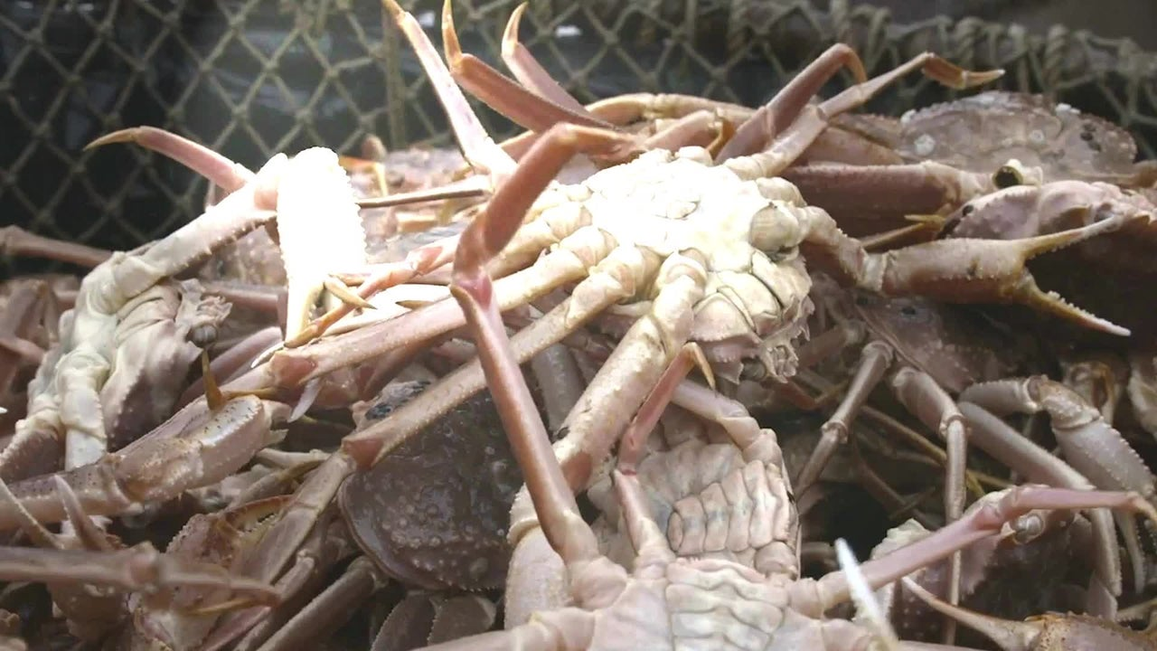 Here's Why Snow Crab Harvest Limits Have Been Slashed