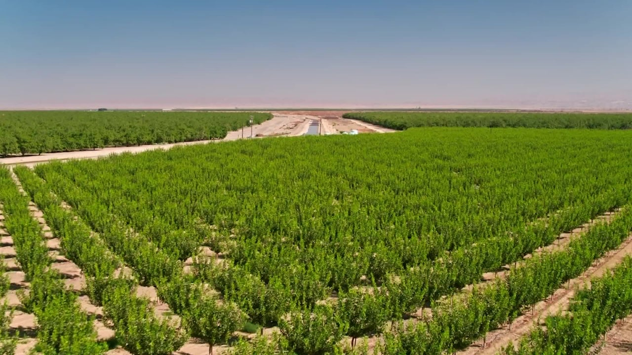 California Farmers Paid Not to Plant Crops
