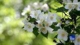 3 Plants to Help You Sleep Better