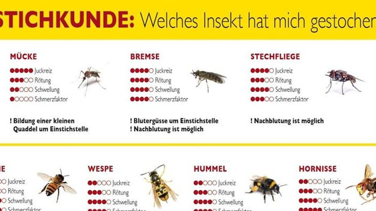 So gefährlich können Insektenstiche werden