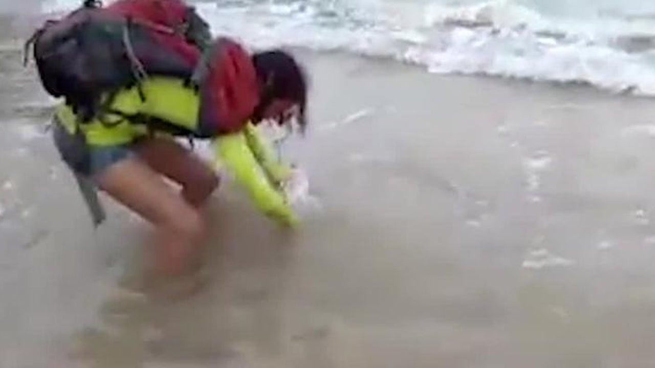 Touristin will Foto mit einem Babyhai machen - Sekunden später bereut sie es