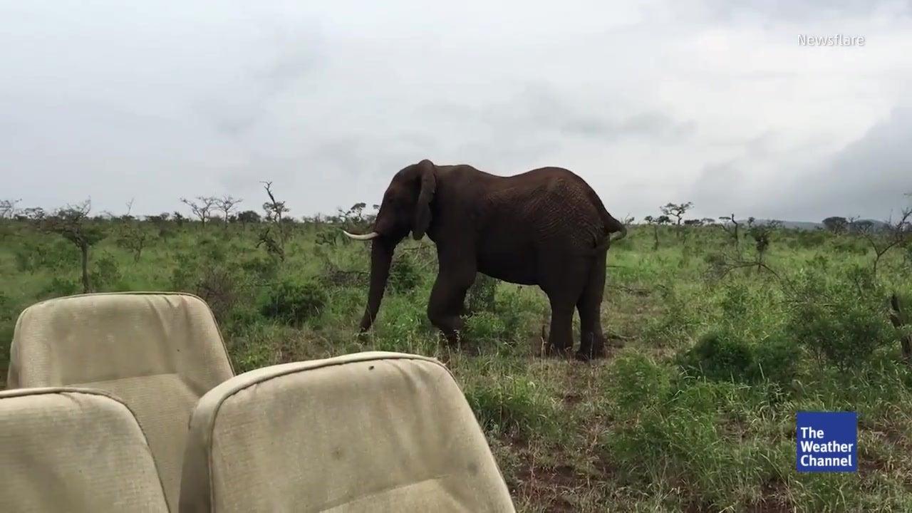 Touristen nerven Elefanten – der dreht den Spieß um