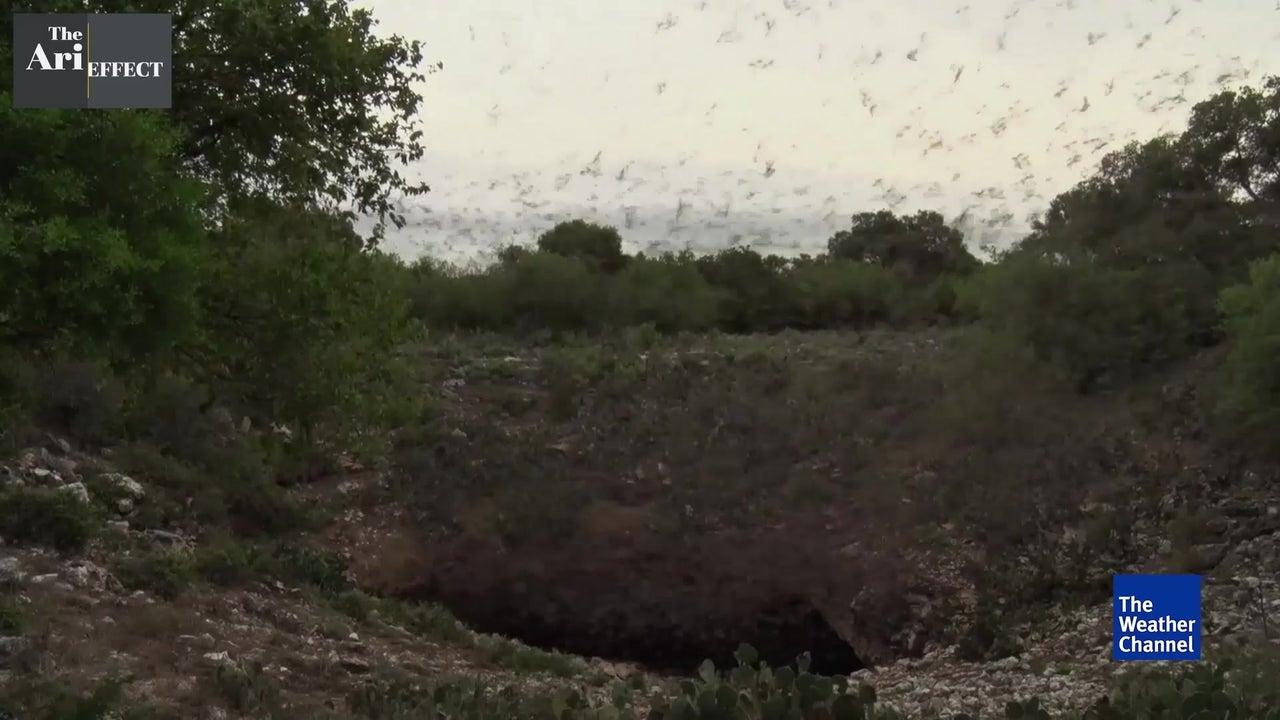 Bats Battling for Survival in the U.S..