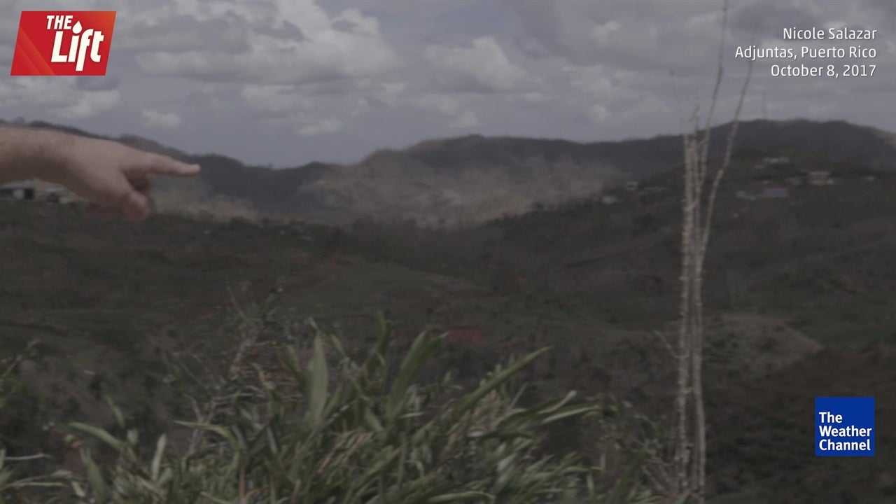 Crops wiped out by Hurricane Maria