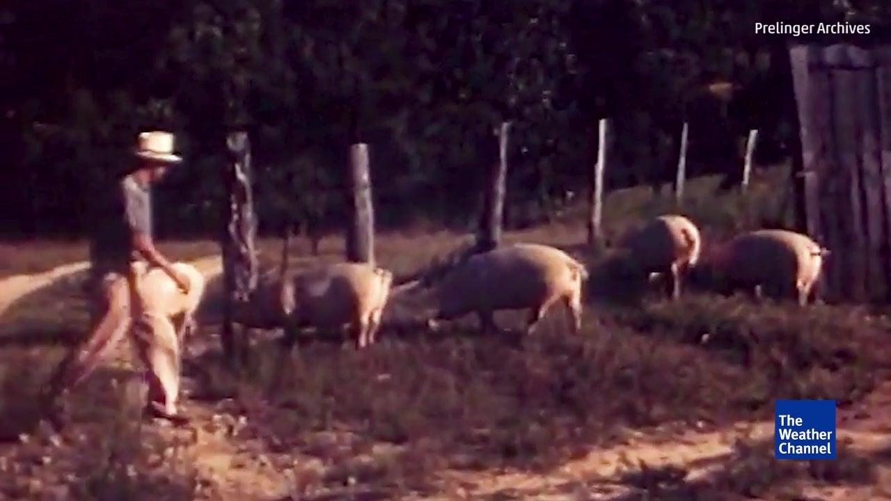 Amazing Vintage Farm Footage