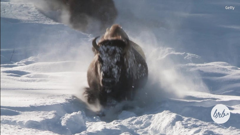 The Beauty Of Yellowstone National Park In Winter The