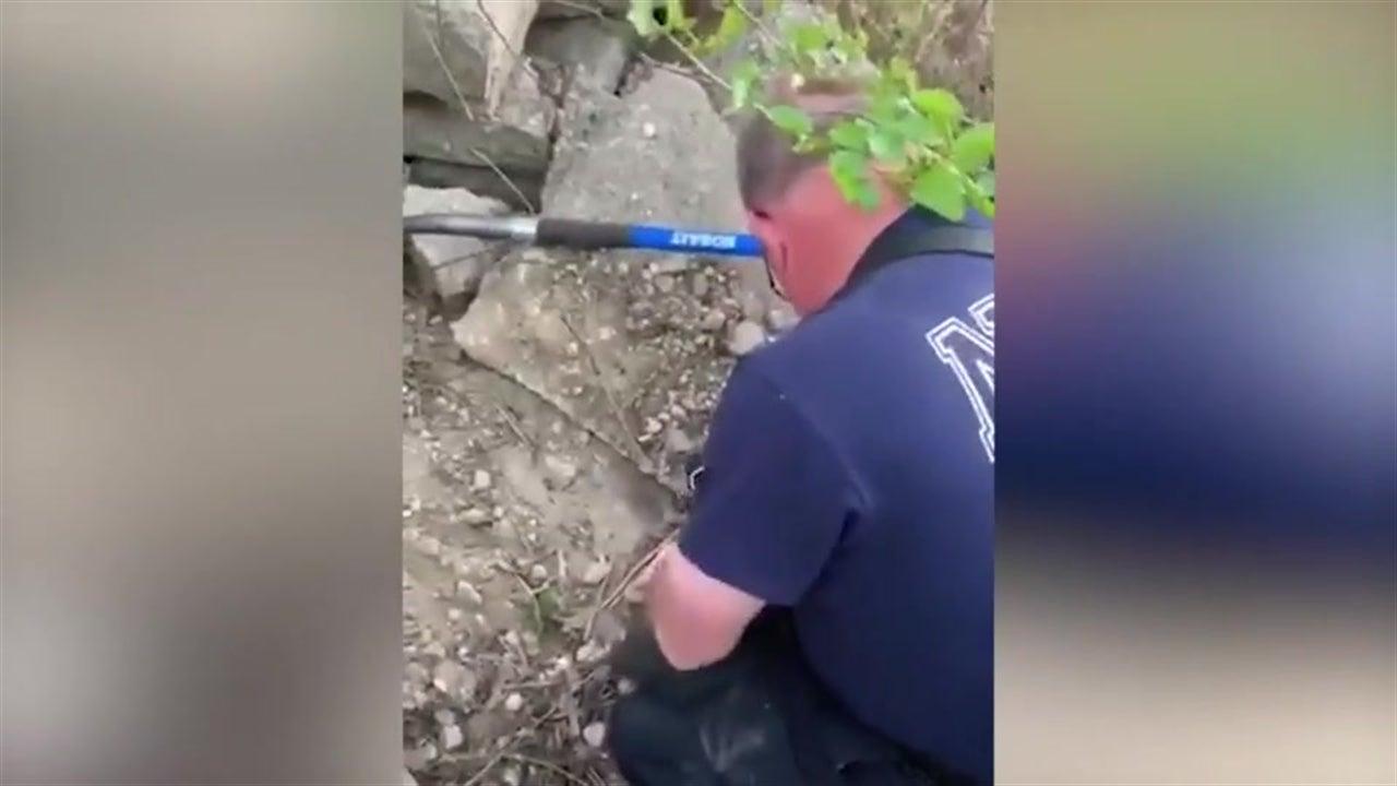 Feuerwehrmann rettet Welpen: Der  bedankt sich auf seine eigene Art
