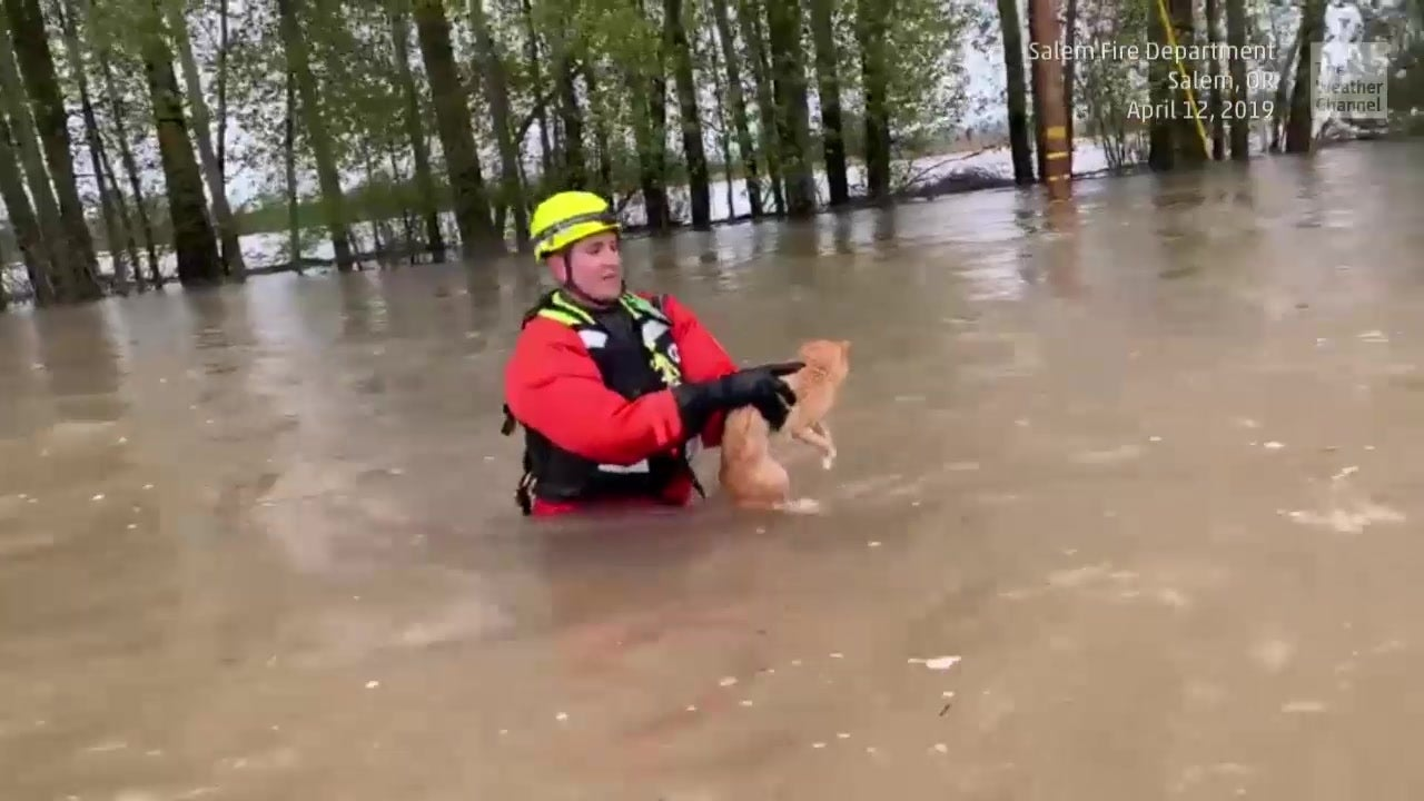 Crews Rescue Cat from Floodwaters