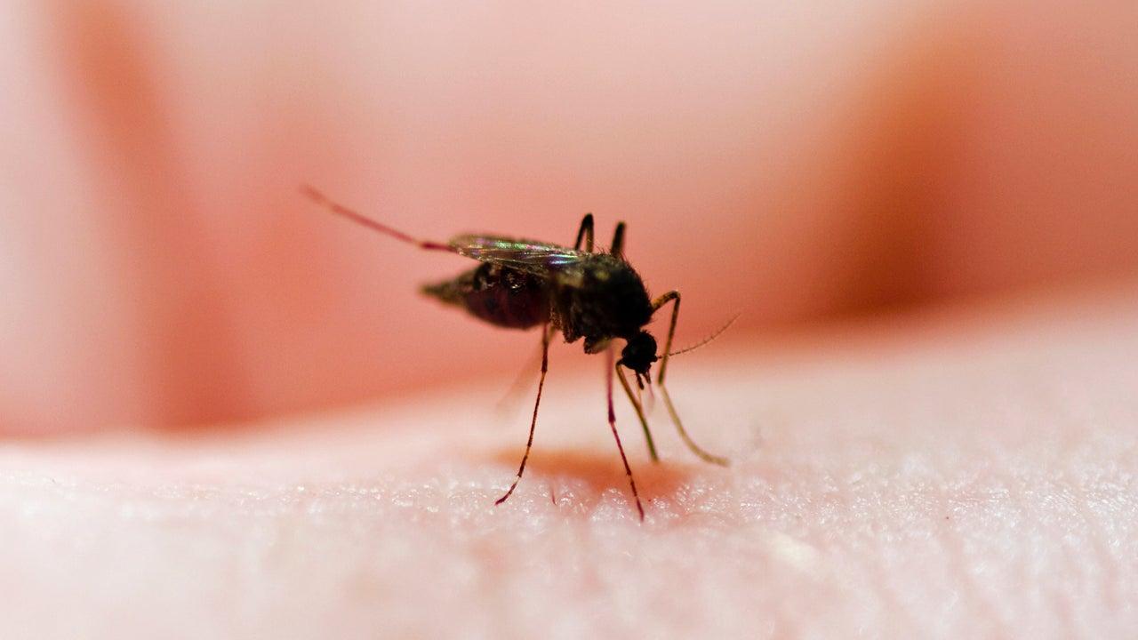 Dieser ungeahnte Trick hilft bei Mückenstichen