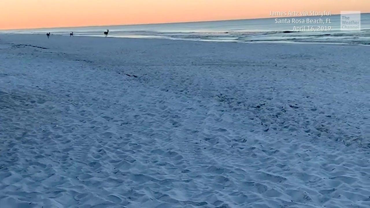 Breathtaking Beauty at the Beach