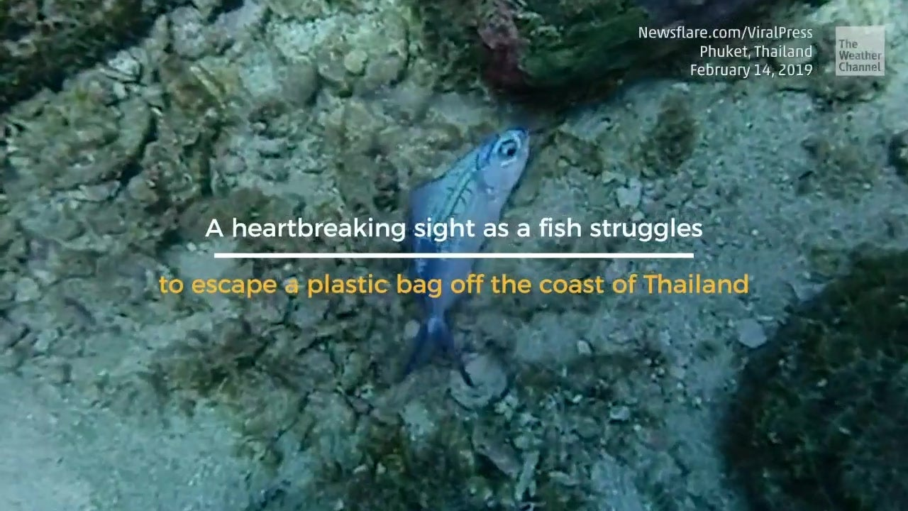 Heartbreaking Scene at Sea