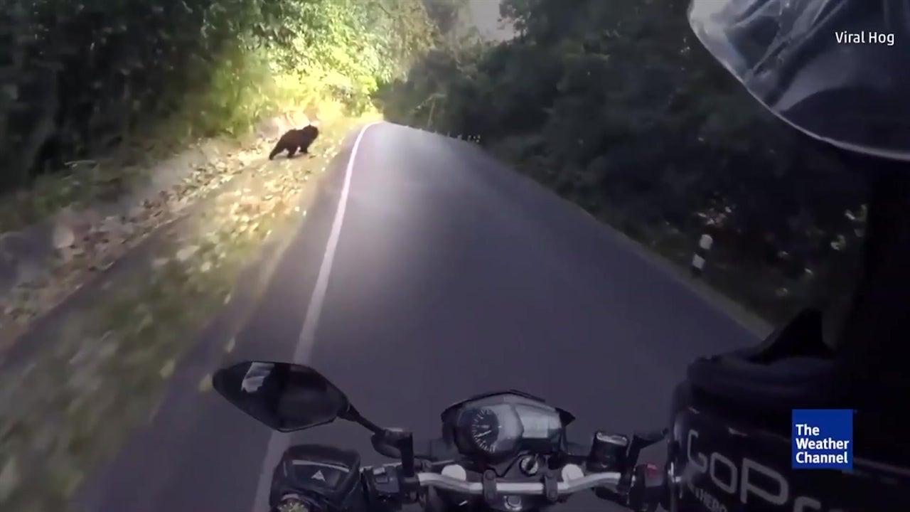 Biker has near miss with black bear