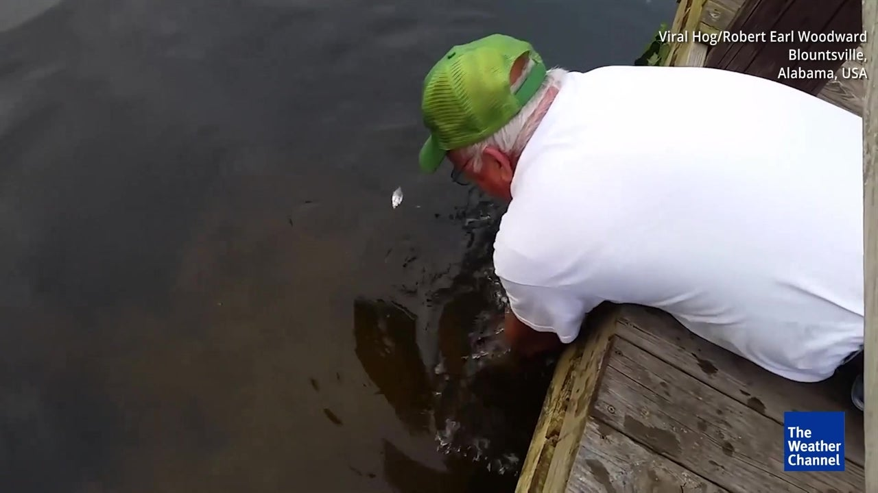 This incredible fisherman uses only his hands