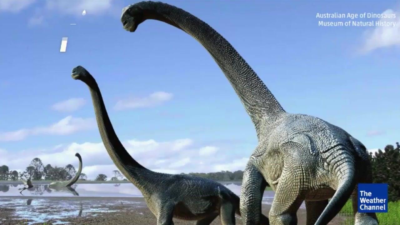 Neue Dinosaurier-Art in Australien entdeckt