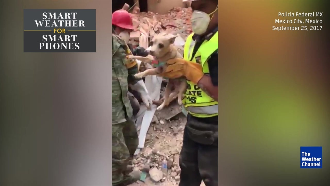 Police rescue dog from rubble in Mexico