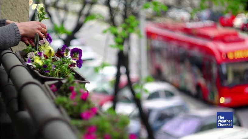 Pflegeleichte Pflanzen Für Balkon Terrasse Und Wohnung