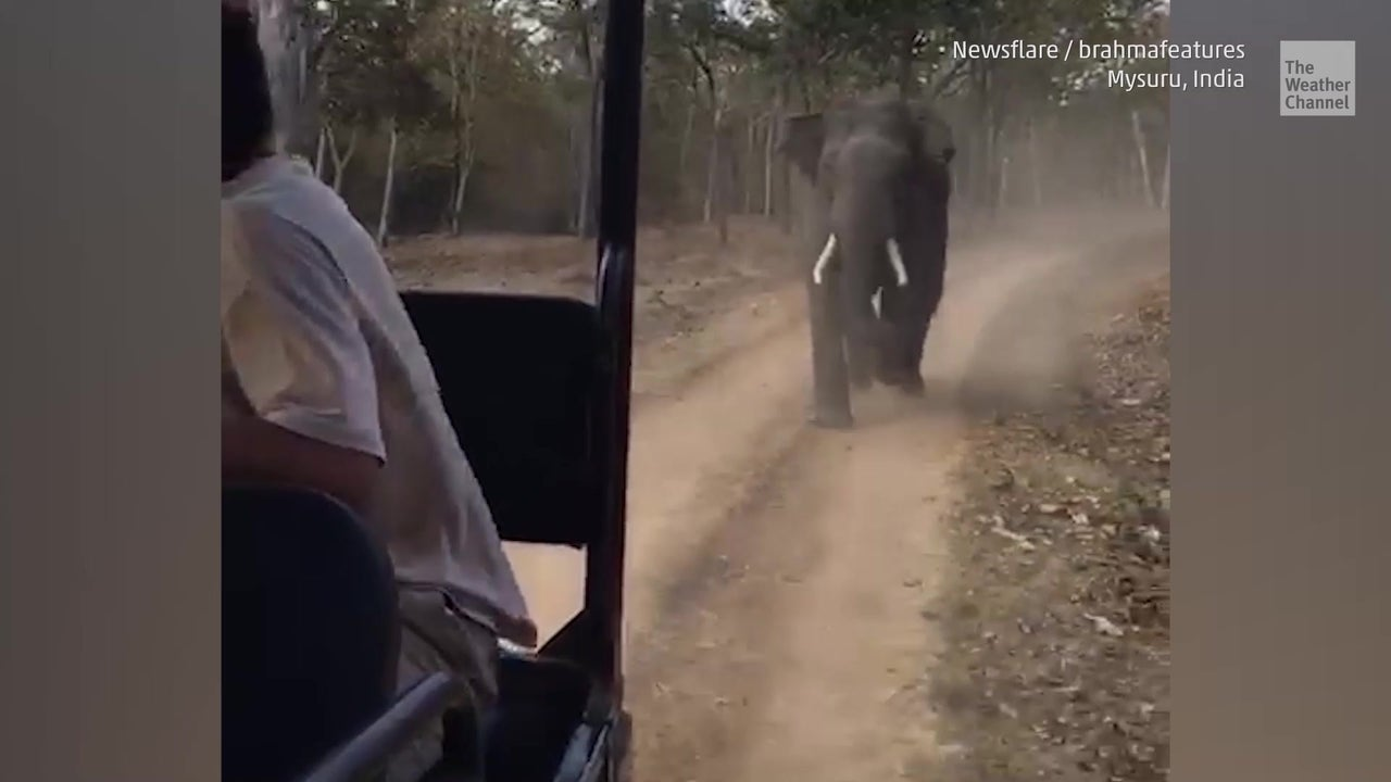 Safari mal anders - Elefant jagt Touristenjeep