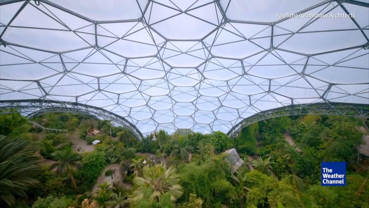 Hier wächst ein Regenwald - mitten in Europa