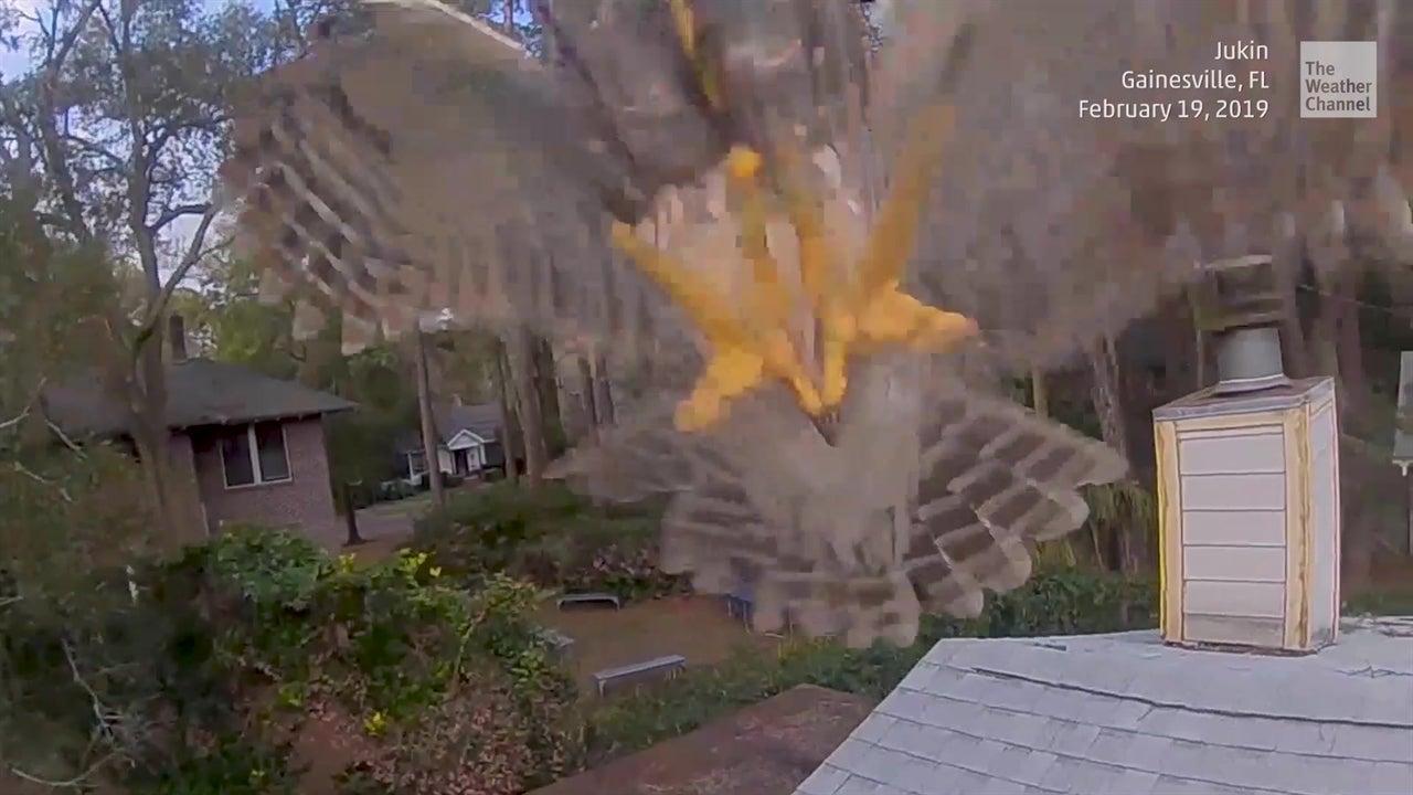 Erkundungsflug endet in Luftkampf: Drohne wird plötzlich attackiert