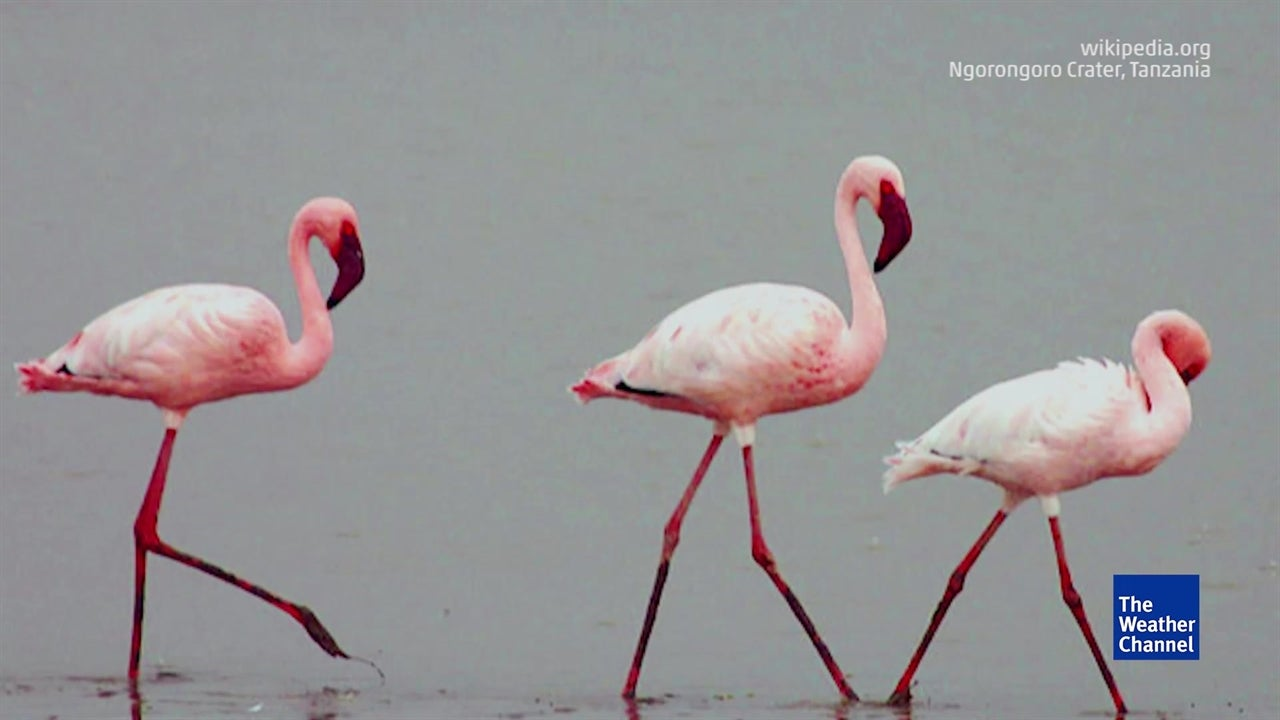 Five Majestic Migratory Birds That Will Take Your Breath Away