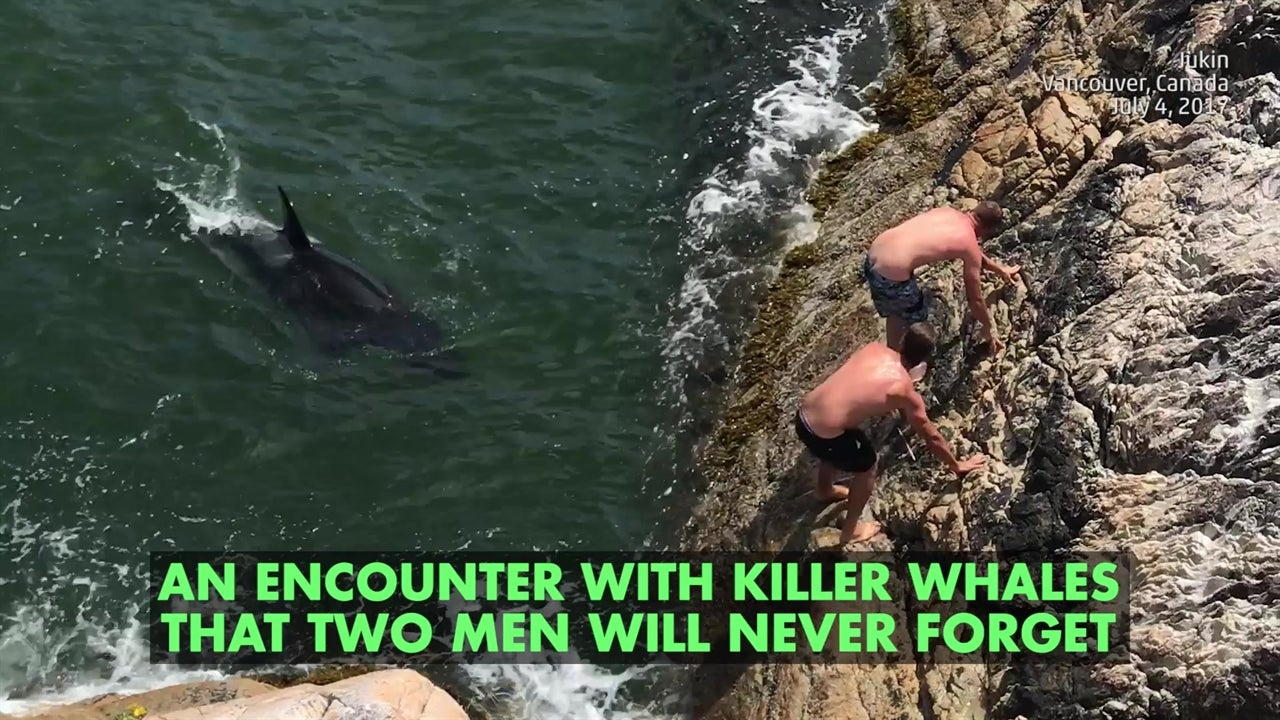 Watch: Unnerving encounter with killer whales