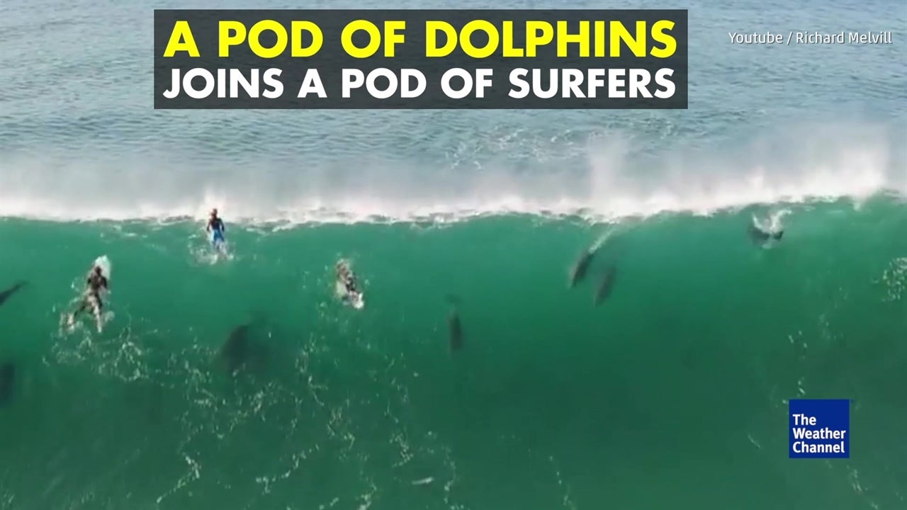 Watch: Spectacular display as dolphins join surfers